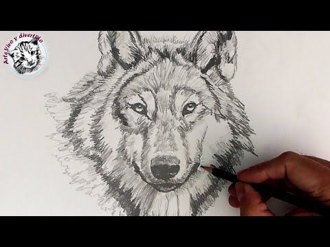 Como Dibujar Un Lobo Realista Con Lapiz Paso A Paso Y Muy Facil Youtube Como Dibujar Un Lobo Lobo Dibujo A Lapiz Dibujo Paso A Paso