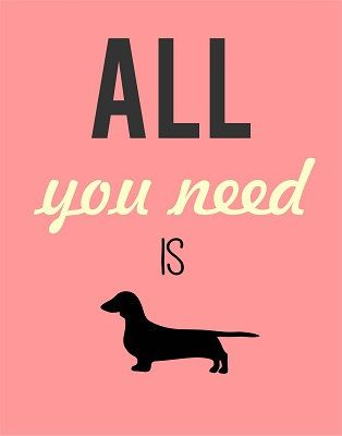 All you need dachshund print