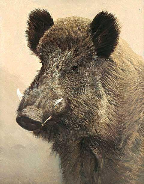 Wild Boar Hog...Manuel Sosa