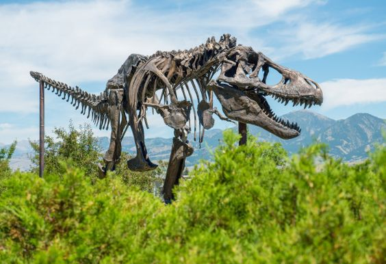 Dinosaurs Museum of the Rockies | Dino Dig 2014: Days 5-12 | Flying Dinosaurs