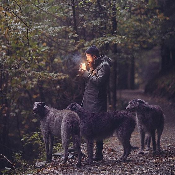 The Scottish Deerhound. #WeeklyFluff