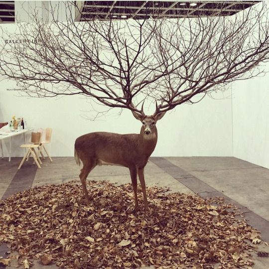 "ART BASEL,Reindeer Antlers ""The ultimate expression of seasonal joy"", pinned by Ton van der Veer"