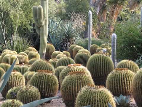 Desert Garden, Huntington Library. The largest, most spectacular desert garden I've seen.