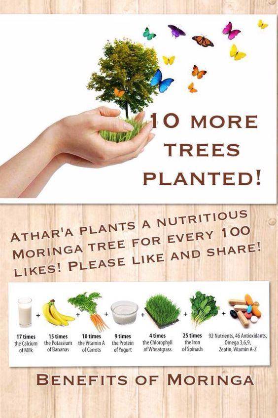 Moringa....the hero ingredient in the Organic Elixir