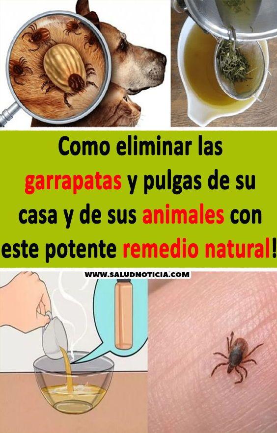 Pin On Remedios Naturales