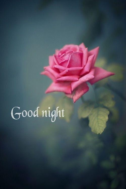 ป กพ นโดย Rita Sciberras ใน ฝ นด Good Night ดอกไม สต กเกอร ดอกก หลาบ