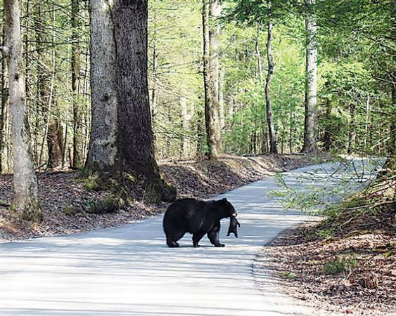 Cades Cove Campground This Photo Was Taken Recently In