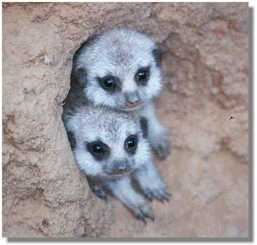 Meerkats Sumally かわいい動物の写真 美しい動物 動物 ペット