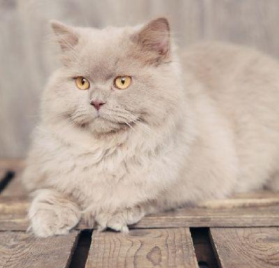 """Cats often speak volumes with their silence."" --Douglas W Braun"
