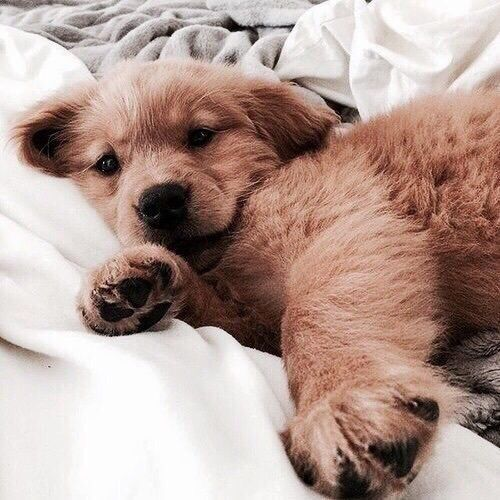 Cute Dog On The Bed Puppies Dogs Puppies Cute Animals