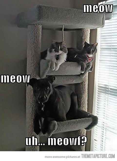 What-is-the-fault-funny-cats-and-dog.jpg 480×659 pixels