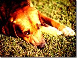 Série: Problemas Neurológicos Caninos | Convulções