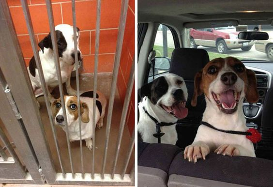 Here is a visual illustration of the difference a dog-day can make... Dogs really don't need the ability to speak -- their facial expressions tell all that needs to be told.