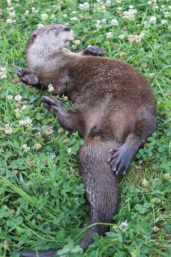 Otter in a field of flowers
