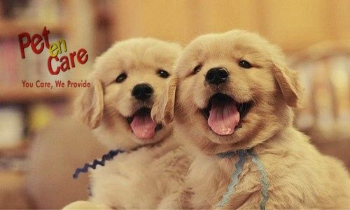 Dogs are not happy because they have the best of everything, they are happy because they make the best of everything. Visit Our Website For #OnlineShopping of #PetProducts -www.petencare.com