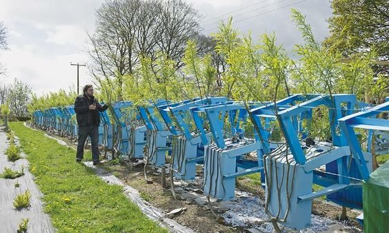 Quando a sustentabilidade se combina com o faça você mesmo, o resultado é maravilhoso. E quando a ideia ajuda a combater o desmatamento, então?! O Full Grown é um projeto desenvolvido pelo designer e agricultor Gavin Munro para desenvolver peças de mobiliário sem prejudicar o meio ambiente ou promover o desperdício. Para isso, Gavin investe na plantação de árvores que já crescem com formatos de móveis. Cadeiras, mesas ou luminárias, dependendo da necessidade.