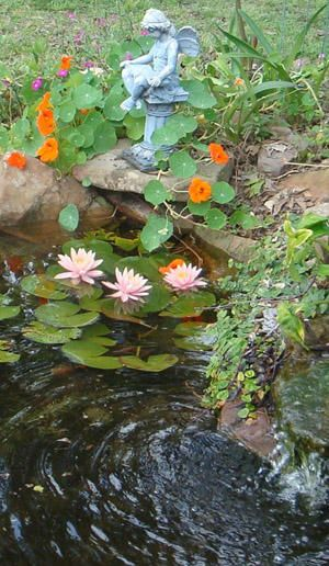 good tips about ponds: Water Feature, Lily Pond, Pond Plant, Water Garden, Ponds Garden