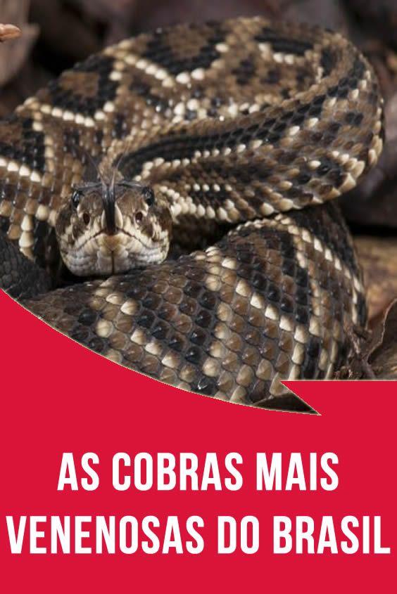 As Cobras Mais Venenosas Do Pais Cobras Cobras Venenosas