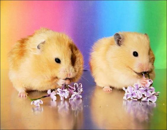 hamstersss!