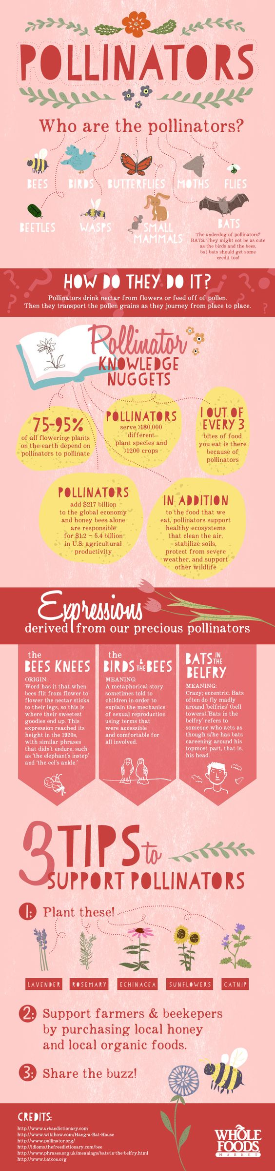 Who are the Pollinators? [Infographic] | ecogreenlove