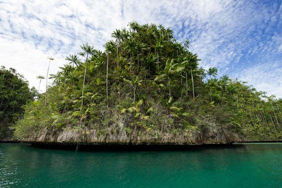 Triton Bay (Indonésie)« Des récifs coralliens comme autant d'îles champignons : la fragilité de l'écosystème prend ici tout son sens. » Nathalie MICHEL Les récifs coralliens couvrent moins de 0,5% du fond des océans alors qu'ils abritent environ 25% de la vie marine.
