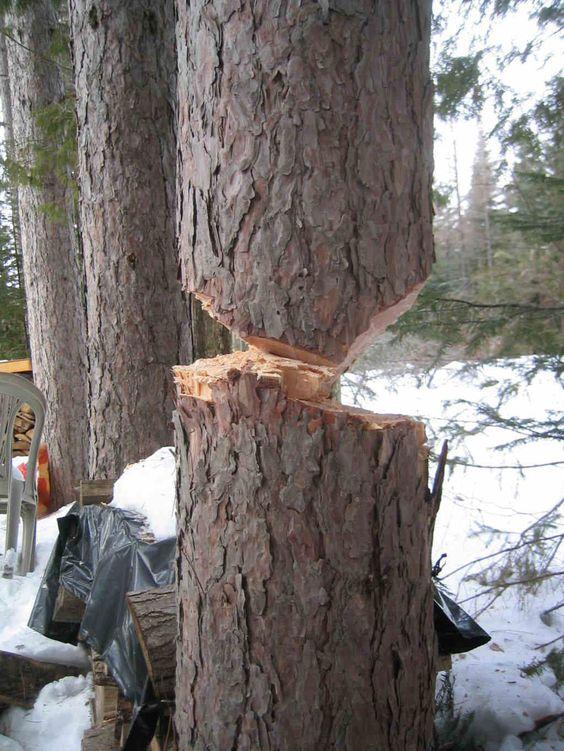 Loft lumber tree cutting 02.jpg (1024×1365)