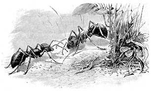"""A well developed colony can be as deep as 30 feet\""""Walter Reeves on Georgia Gardener radio"""".Simply pour two cups of CLUB SODA (carbonated water) directly in the center of a fire ant mound. The carbon dioxide in the water is heavier than air and displaces the oxygen which suffocates the queen and the other ants. The whole colony will be dead within about two days.   club soda leaves no poisonous residue, does not contaminate the ground water, doesn't kill other insects,not harmful to your…"""