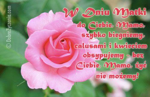 Kochanej Mamie Rose Plants Flowers