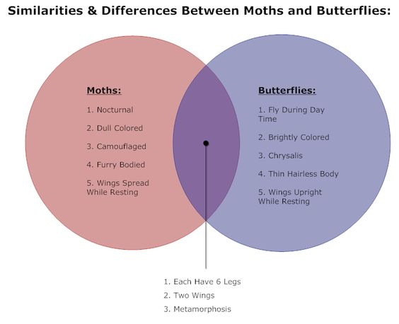 example image  butterflies  u0026 moths venn diagram