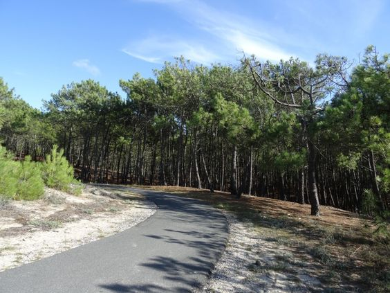 Découvrir la forêt des Landes en parcourant ses pistes cyclables en vélo, notamment la piste Lacanau-Océan à Lège Cap Ferret !
