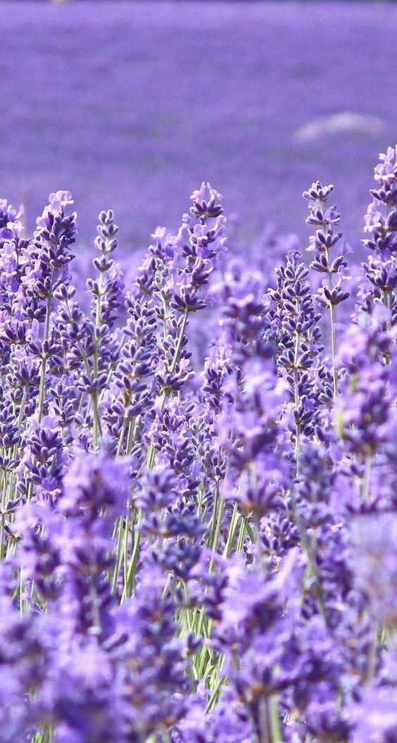 Pretty Flower Wallpaper Iphone Backgrounds The Best Beautiful Flower Wallpaper A In 2020 Purple Flowers Wallpaper Flower Iphone Wallpaper Beautiful Flowers Wallpapers
