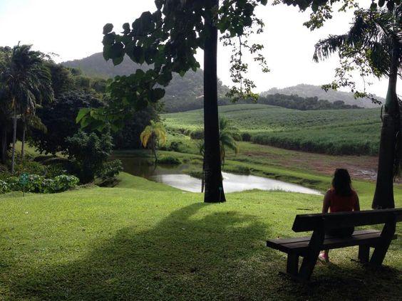 #nature #Martinique #calme #vacances #noel #famille