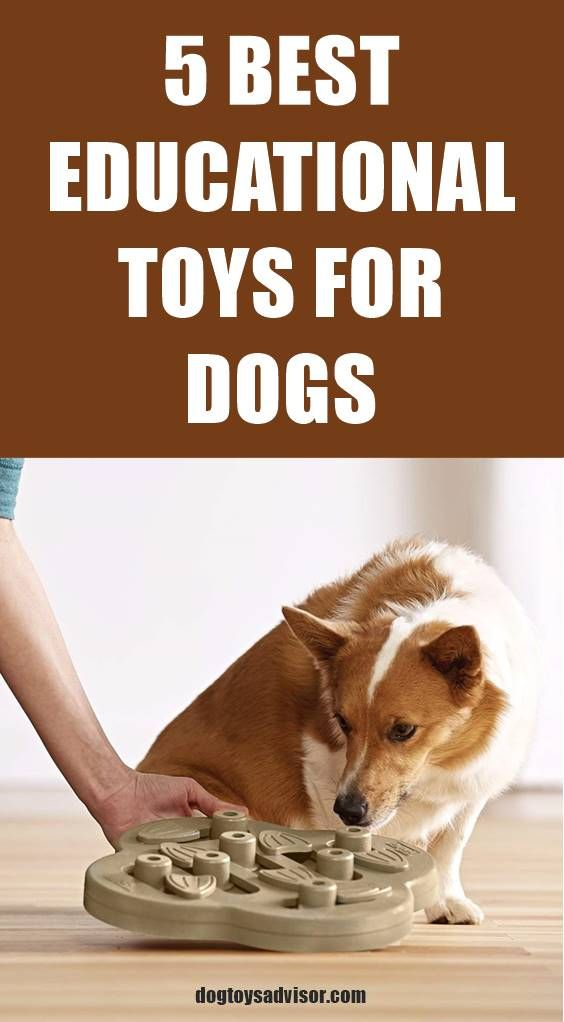 Smart Dogs Need Mental Stimulating Games And Interactive Toys To
