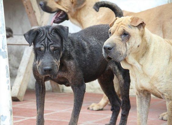 #Los perros tienen memoria episódica y se acuerdan de lo que hacen sus dueños - W Radio: Los perros tienen memoria episódica y se acuerdan…