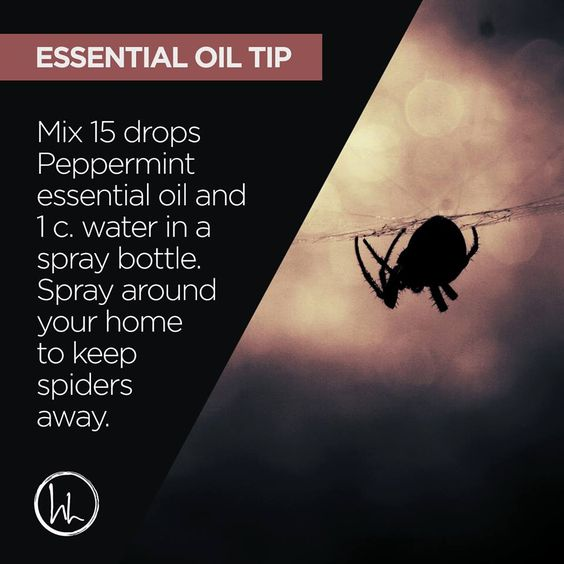 I know I'm not the only one that hates spiders. But I can deal with them as long as they stay outside where they belong. That means I need to protect my home from them at all costs! If you feel the same way (and who doesn't?), but don't want to use harsh chemicals for pest control, then I have an excellent tip for you today! Peppermint essential oil works wonders to help keep spiders away! Spray this mix around your home to help keep spiders outside where they belong! www.hayleyhobson.com