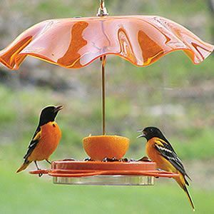 Birdfeeder with a pretty glass umbrella (that just happens to match the birds' coloring!)