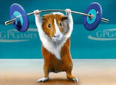 Porquinhos-da-índia olímpicos: soooo cute!!!