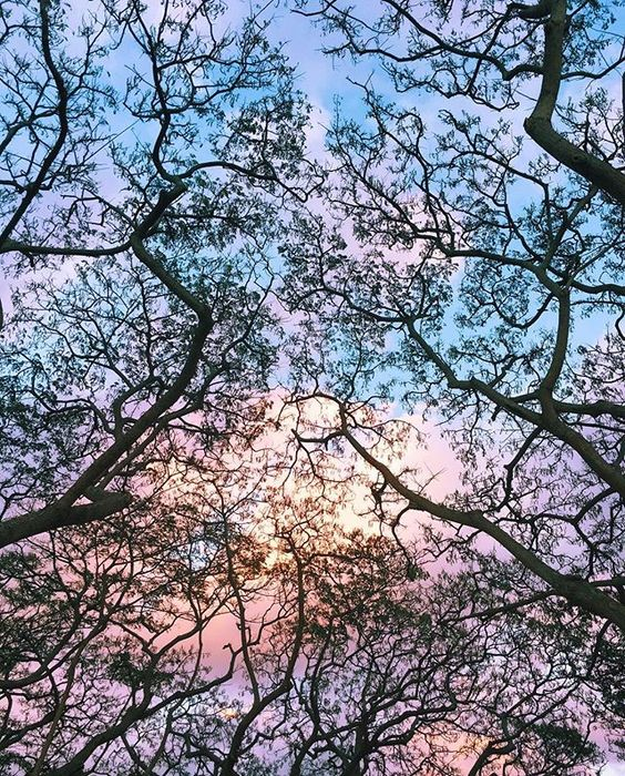 DON'T FORGET TO LOOK UP 🍃 Nature Art 🍃Sky ✖️ Tree  It looked like a beautiful black lace with watercolor background 😍  #throughmyeyes #ハワイ