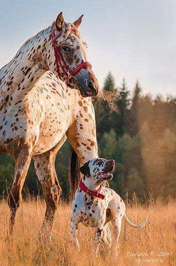 Horses ♥– Сообщество– Google+