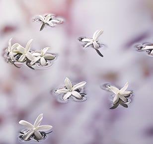 Mon Guerlain Eau de Parfum Florale de Guerlain