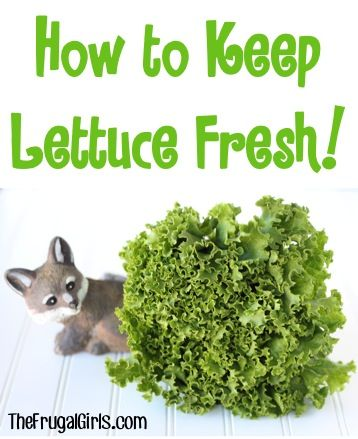 how to keep celery fresh in your refrigerator