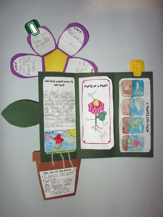 Plant unit foldable for Gr. 2-4