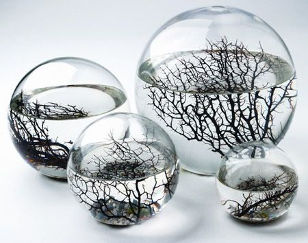 EcoSphere - self-contained and self-sustaining miniature world encased in glass. (via Cabinet of Curiosities)