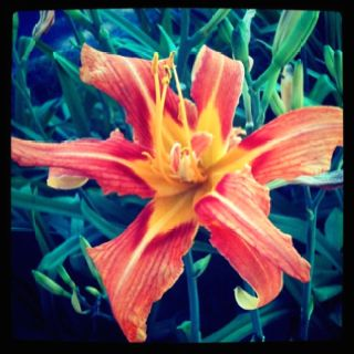Lily.