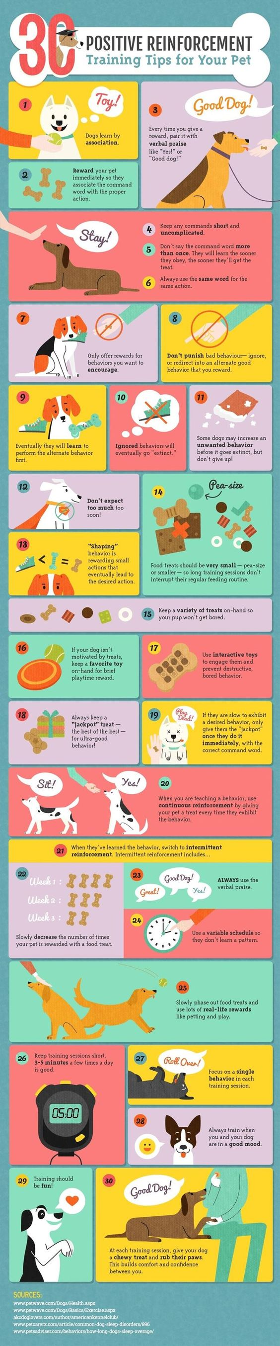 30 Positive Reinforcement Tips to Train Your Dog
