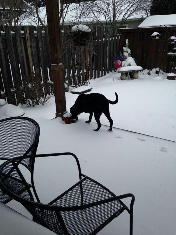 Sadie's adventure in the snow