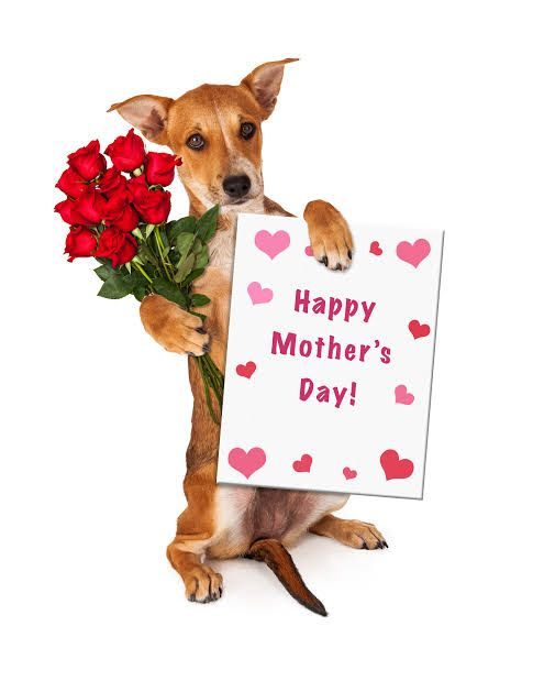 Best Gifts For Mother S Day 2019 Gift Ideas That Every Mother Will Love Dog Mothers Day Happy Mothers Day Happy Mother Day Quotes