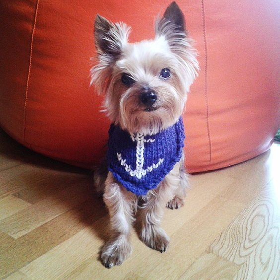 Pañuelo cuello tejido para perros