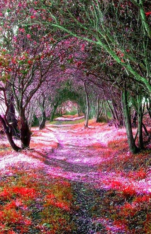 Pinterest ein katalog unendlich vieler ideen Wisteria flower tunnel path in japan