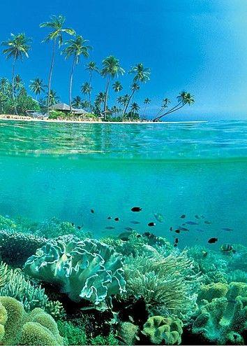 Split-view, Southeast Sulawesi, Indonesia